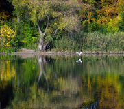 Changing colors. Autumn landscape at the Tisza backwater in Tiszadob, Hungary. Royalty Free Stock Images