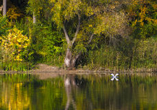 Changing colors. Autumn landscape at the Tisza backwater in Tiszadob, Hungary. Royalty Free Stock Photos
