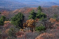 Changing colors at autumn, a moment before the arrival of winter. Bear Mountain State Park stock image