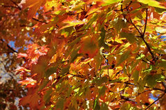 Changing colors of fall Stock Image