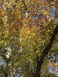 Changing Colors. Trees fall leaves of green, yellow orange and Stock Photo