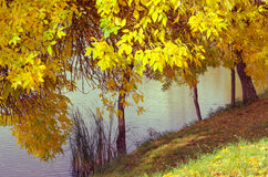 Changing colors. Vintage autumn season landscape at the Tisza backwater in Tiszalok, Hungary. Fallen yellow leaves. Changing colors. Vintage autumn season Royalty Free Stock Photography
