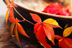 Changing colours of autumn Royalty Free Stock Image