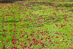 Changing colours Stock Images