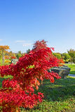 Changing colours Stock Image