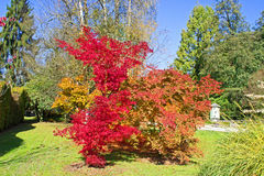Changing colours Royalty Free Stock Photography