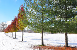 Changing of the leaves with changing seasons. Fall turning to winter with an early snow stock image