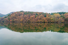 Changing leaves over Nami island Royalty Free Stock Images