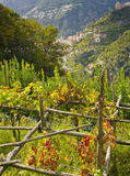 Changing Leaves, Ravello, Italy Stock Photo