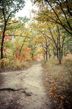 Changing Path. A trail cutting through the changing colors of a fall forest Royalty Free Stock Photography