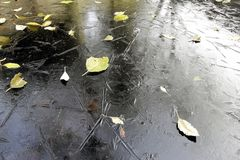 Changing of the season. A frozen pond with water crystals, reflection of surrounding area and sky, and leafs fall on top, signifies winter is coming Royalty Free Stock Photos