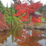 Changing of season in Japanese Garden. Colors of red bursts out bright Stock Photo