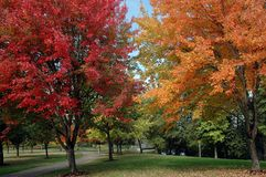 Changing Seasons. Autumn colors at the park Stock Image
