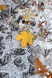 Changing seasons. Autumn's yellow leaves on winter snowy road royalty free stock image