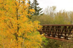 Changing Seasons. A beautiful old bridge with an even more beautiful old tree royalty free stock photos