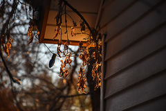 Changing Seasons Fall Leaves And Christmas Lights. Detail Stock Photography
