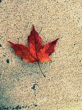 Changing Seasons. The first sign of fall stock photography