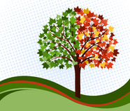 Changing seasons tree Stock Images