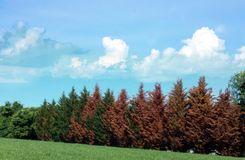 Changing Seasons. Treeline showing changing fall colors contrast royalty free stock images