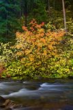 Changing of the Seasons. Trees leaves changing in color on the banks of a river on fall day royalty free stock images