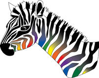 Changing stripes. A zebra with black stripes fading into a spectrum of colors Royalty Free Stock Images