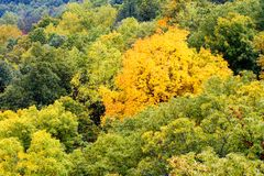 Changing trees. Early fall scene in Appalachian Mountains - some trees are beginning to change color Stock Photos