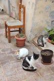 Chania, Crete Stock Photo