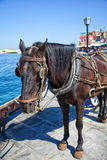 Chania horse royalty free stock images
