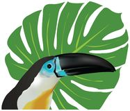 Channel-billed Toucan. Portrait of a channel-billed Toucan. The vector illustration was created using meshes and gradients royalty free illustration