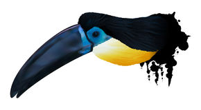 Channel-billed toucan illustration Stock Images