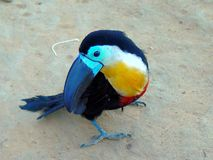 Pet Channel-billed toucan in Native Amazonian Indian Village stock photography