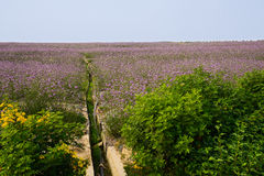 Channel in blossoming hillside Stock Photography