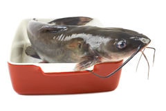 Channel catfish in a ceramic Stock Photography