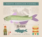 Channel Catfish. North American Fishing Infographic Set. Freshwater Fish. Vector Illustration Stock Image