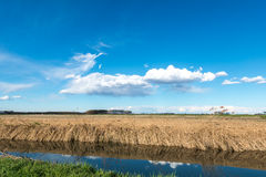 Channel with fields and poplars, Lomellina (Italy) Royalty Free Stock Photos
