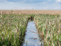 Channel through reeds. In a river delta Royalty Free Stock Images
