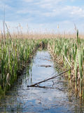 Channel through reeds. In a small delta Royalty Free Stock Photography