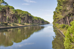 Channel of San Rossore Regional Park, Italy Royalty Free Stock Image