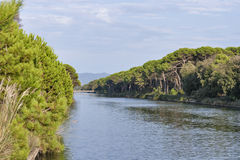 Channel of San Rossore Regional Park, Italy Royalty Free Stock Photos