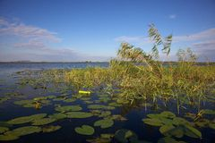Channel in theDanube Delta, Romania Royalty Free Stock Image