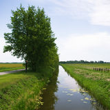 Channel and trees Stock Images