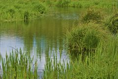 Channel of water runs through green marsh Stock Images