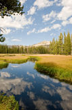Channels into Wrights Lake. A scene of a waterway leading into Wrights Lake flanked by lush meadows and trees near Lake Tahoe, Sierra, Navada, USA Stock Image