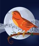 chant d'oiseau Images stock