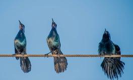 Chant sur un fil Photographie stock libre de droits