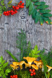 Chantarelle mushrooms ai wooden background. With lingonberry and leaf as s post card Royalty Free Stock Photos