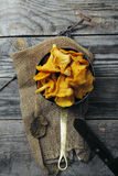 Chantarelle mushrooms picked in bowls Stock Image
