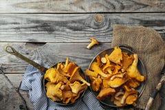 Chantarelle mushrooms Stock Photography