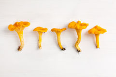 Chantarelles in a row on white wooden background. Five chantarelles in a row on white wooden background stock photography