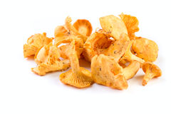 Chanterelle Stock Photography